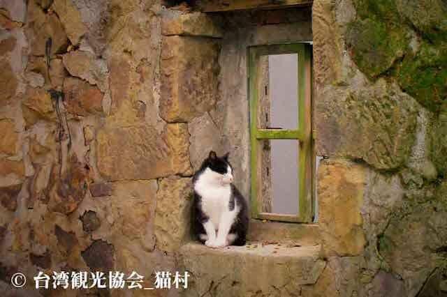 台湾・ホウトン(侯硐)の猫