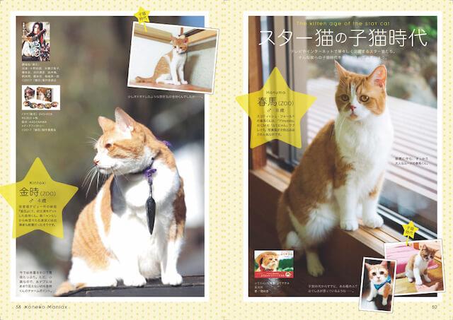 春馬、金時、ジャックなどスター猫の子猫時代の写真