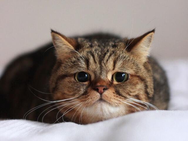 飼い猫のイメージ