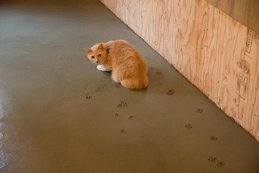 改装中の猫本屋に肉球の跡をつける猫