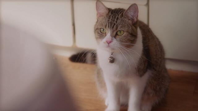 父の日の猫動画、じっと見つめる猫
