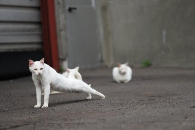 野良猫の撮影テクニック、イメージ写真