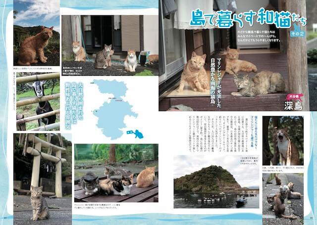 猫島・深島(大分県佐伯市)の猫