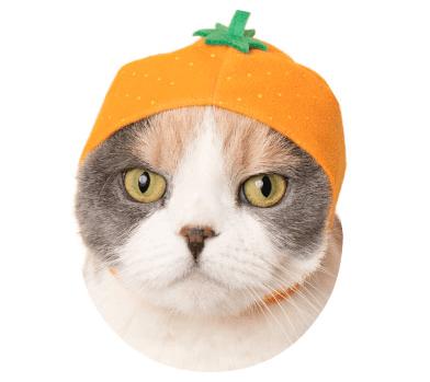 猫のかぶりもの「かわいい かわいい ねこフルーツちゃん」、みかんバージョン
