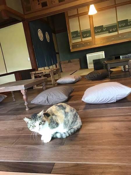 店内にいる保護猫