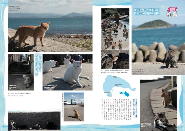 猫島・相島(福岡県新宮町)の猫