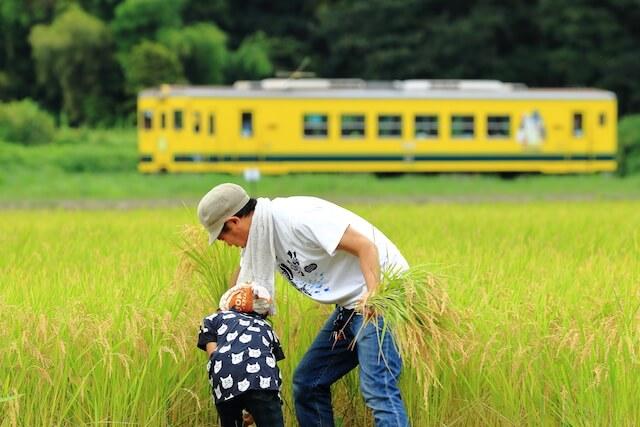 福田豊さんの鉄道写真、稲を収穫する人びと