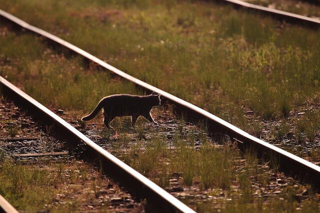 福田豊さんの「猫と鉄道写真」、線路をゆっくり歩いて横切る猫