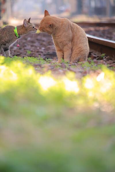 omuさんの「猫と鉄道写真」、線路上で鼻先をつけて挨拶する2匹の猫