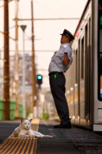 大塚義孝さんの「猫と鉄道写真」、駅のホームで佇む白猫と伸びをする車掌さん
