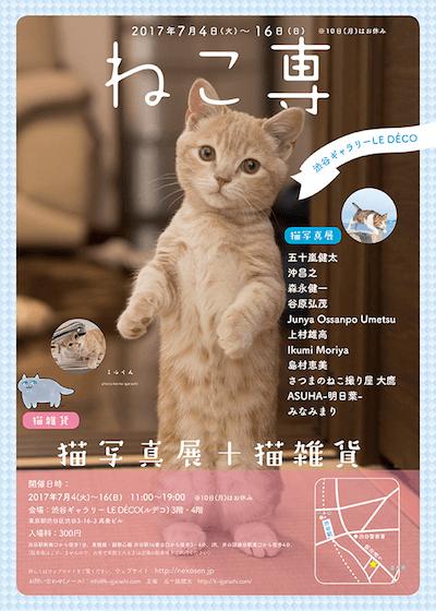 五十嵐健太さんが主催する猫の写真展「ねこ専」