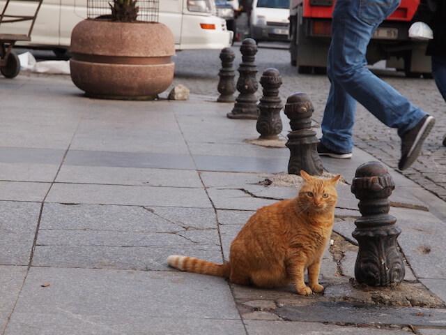 劇場版「岩合光昭の世界ネコ歩き」に登場する路上の茶トラ猫