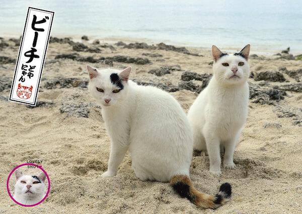 ビーチにいるドヤ顔の猫、どやにゃん