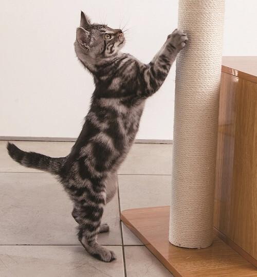 木製ロータイプキャットタワーで爪をとぐ猫
