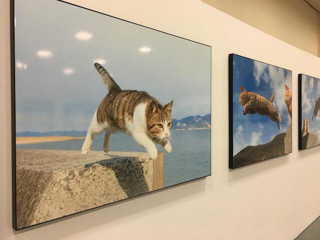 五十嵐健太さんの作品、飛び猫