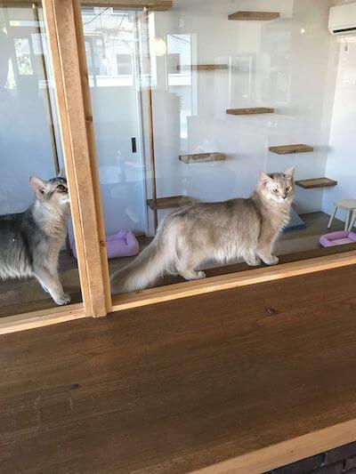 キャットルーム内の猫ちゃんを眺めながら飲食できる