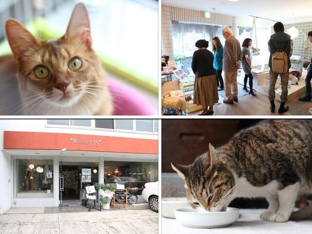 キャットフードの選び方セミナーが南青山で開催!愛猫との同伴も可