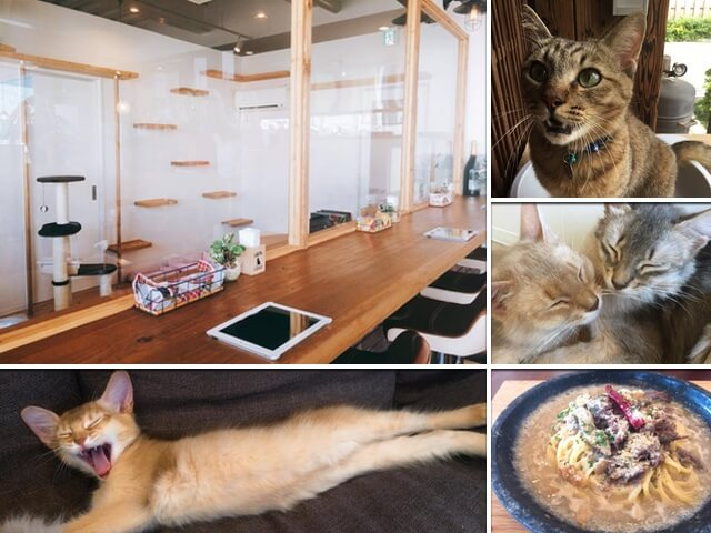 猫カフェ+石焼生パスタのお店「石焼 Cafe & Cat 蔵之助のしっぽ」が京都にオープン