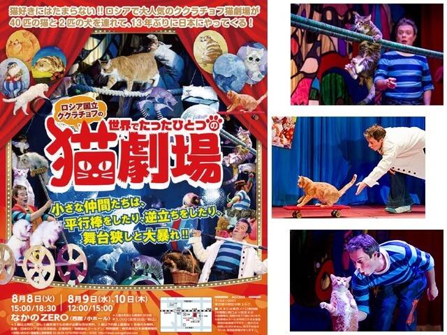 ロシア国立の猫サーカス団「ククラチョフの世界でたったひとつの猫劇場」が8月に東京、大阪、愛媛で来日公演
