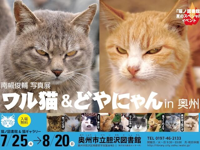 怖いけど可愛くて笑ってしまう、南幅俊輔氏による猫の写真展「ワル猫&どやにゃん」