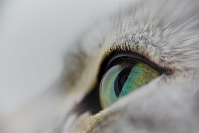 不思議で神秘的な魅力を持つ猫のイメージ写真