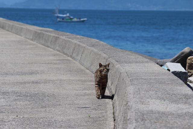 猫島・佐柳島(香川県)の猫 by にっぽん猫島紀行