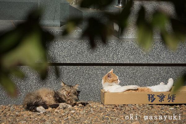 沖昌之さんの作品、空き箱でリラックスする猫