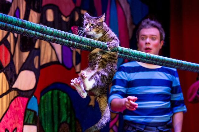 「ククラチョフの世界でたったひとつの猫劇場」の公演シーン