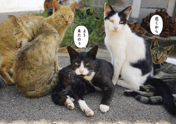 悪そうな顔をした猫たち、ワル猫の写真