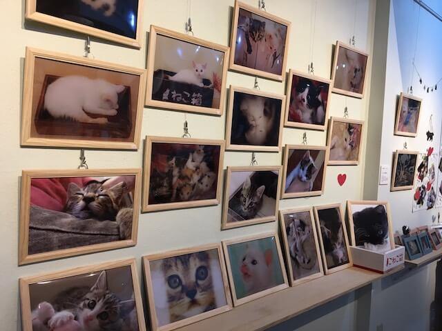 「こにゃんこ展」の仔猫写真