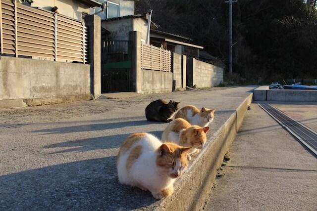 猫島・男木島(香川県)の猫 by にっぽん猫島紀行