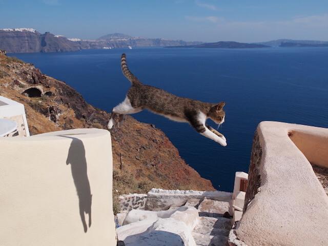 劇場版「岩合光昭の世界ネコ歩き」に登場するジャンプする猫