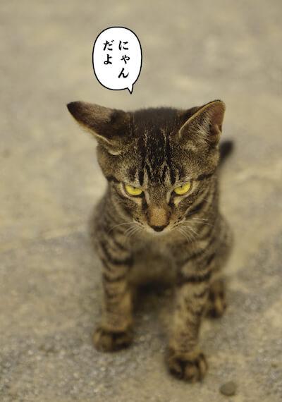 ワル猫のキジトラ子猫