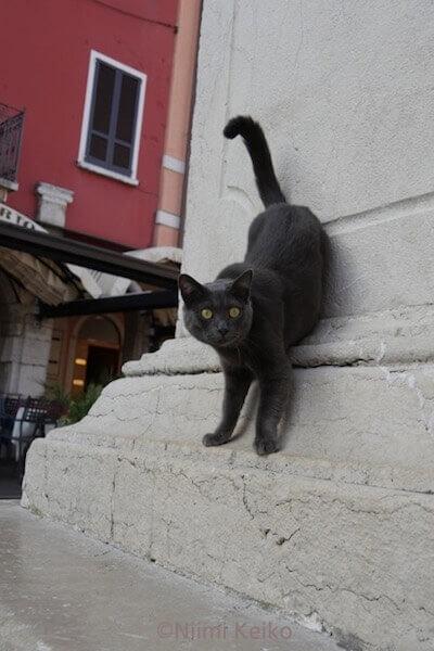 「恋する猫さんぽ」の収録ネコ写真、黒猫