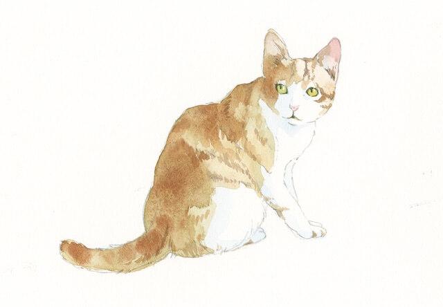 青木美和さんの透明水彩画作品、振り返る茶白猫