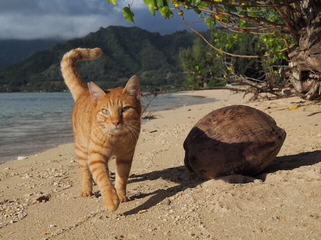 劇場版「岩合光昭の世界ネコ歩き」に登場する砂浜を歩く猫