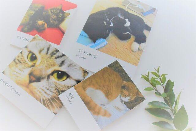 しまうまプリントで作成した猫のフォトブックイメージ