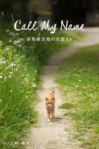 カメラマン上村雄高さんによる、福島県・原発被災地の猫の写真