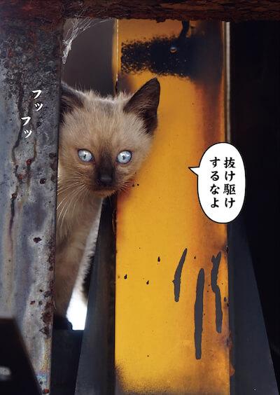 ワル猫のシャム子猫