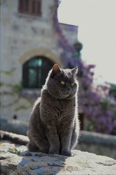 「恋する猫さんぽ」の収録ネコ写真、グレー猫
