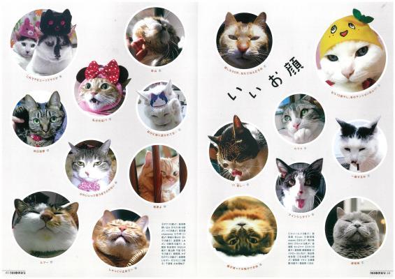 ムック本「ネコまる特盛!」に収録されている、投稿誌「ネコまる」で反響の合った作品