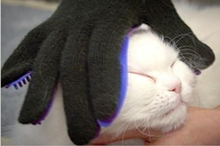 ペット用ラバーブラシ「トゥルータッチ」で猫の顔をブラッシング