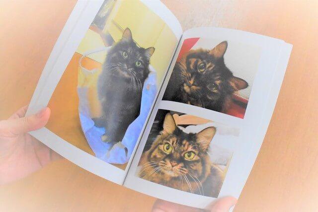 愛猫のフォトブック