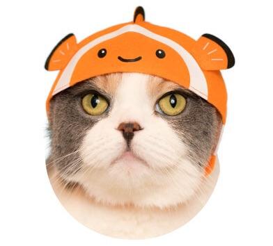 猫のかぶもの「カクレクマノミ」