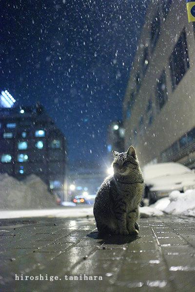 谷原弘茂さんの作品、雪の降る道端に佇む猫