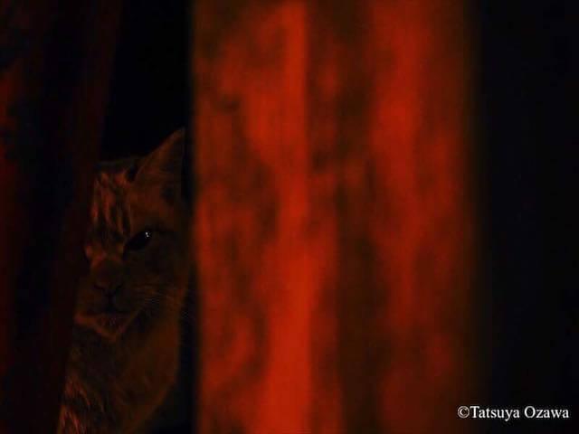 小沢竜也写真展「おかげさま~常世の使~」の猫写真2