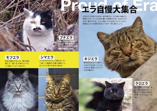 ワル猫のエラ顔分類