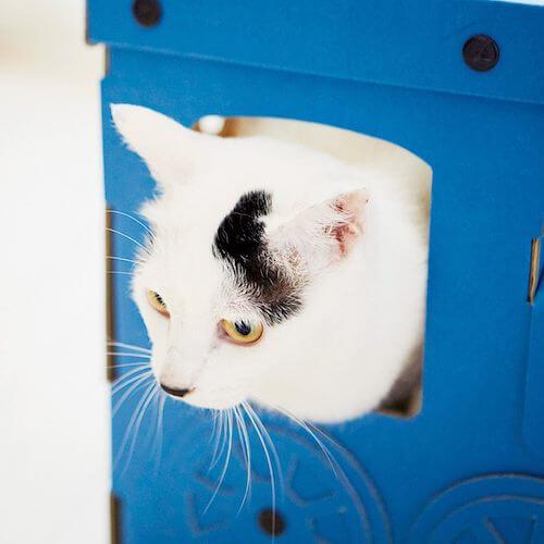 機関車型の猫ハウスから顔を覗かせる猫