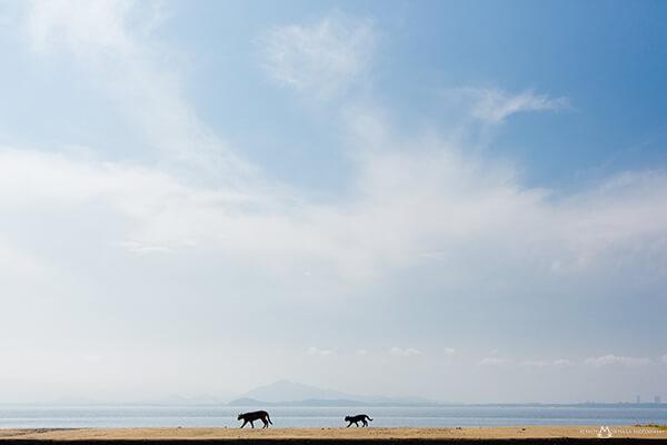 猫写真家・森永健一(モリケン)さんの作品、海岸線を歩く2匹の猫