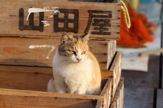 猫島・真鍋島(岡山県) by にっぽん猫島紀行